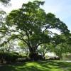 Tree 113924 640 1